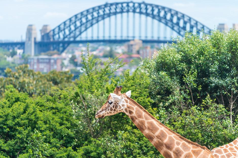 Taronga Zoo - Sargood on Collaroy